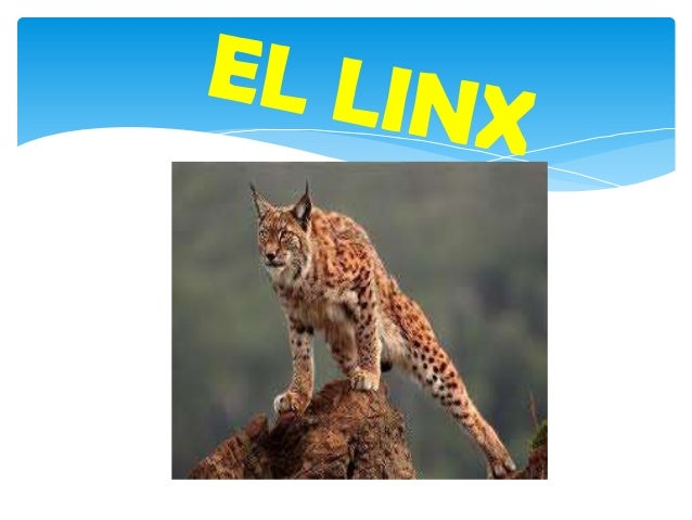 Introducció Les diferents espècies de linxs normalment es defineixen pel lloc on es distribueixen. El linx canadenc, per e...