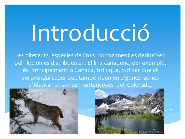 On viuen els linxs? EXEMPLES  Aquest és l'habitat del linx ibèric  Aquest és l´habitat del linx canadenc