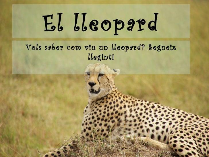 El lleopard Vols saber com viu un lleopard? Segueix llegint!