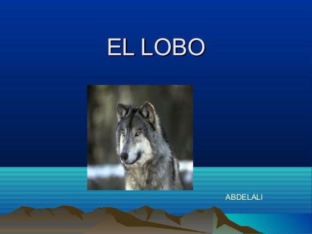 EL LOBO          ABDELALI