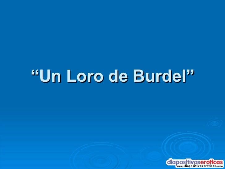 """"""" Un Loro de Burdel"""""""