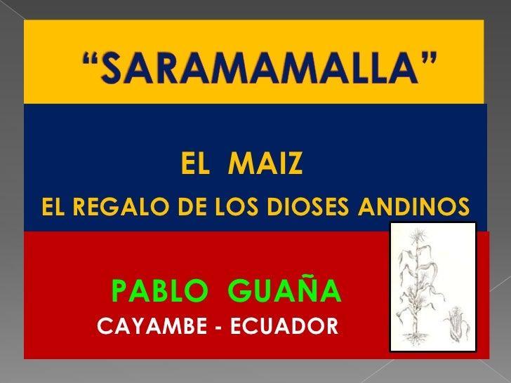 """""""SARAMAMALLA""""<br />                 EL  MAIZ  <br />EL REGALO DE LOS DIOSES ANDINOS<br />PABLO  GUAÑA<br />          CAYAM..."""