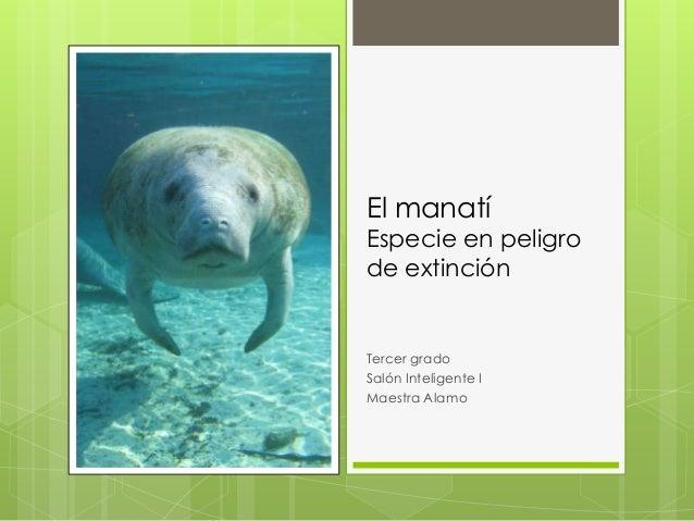 El manatí  Especie en peligro de extinción  Tercer grado Salón Inteligente I Maestra Alamo