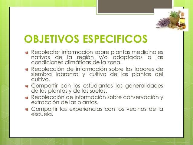 El maravilloso mundo de las plantas medicinales - Todo sobre las plantas ...