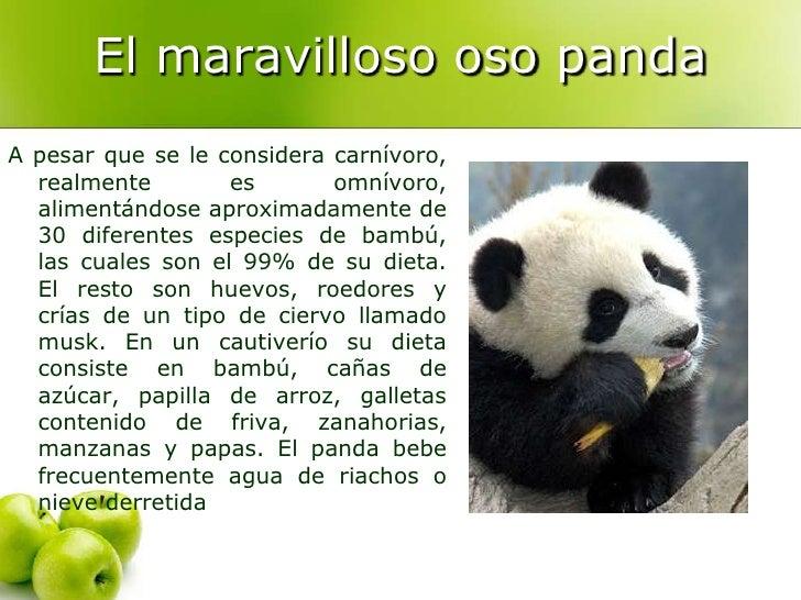 Información sobre el oso panda