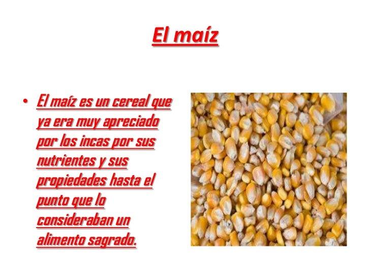 El maíz• El maíz es un cereal que  ya era muy apreciado  por los incas por sus  nutrientes y sus  propiedades hasta el  pu...