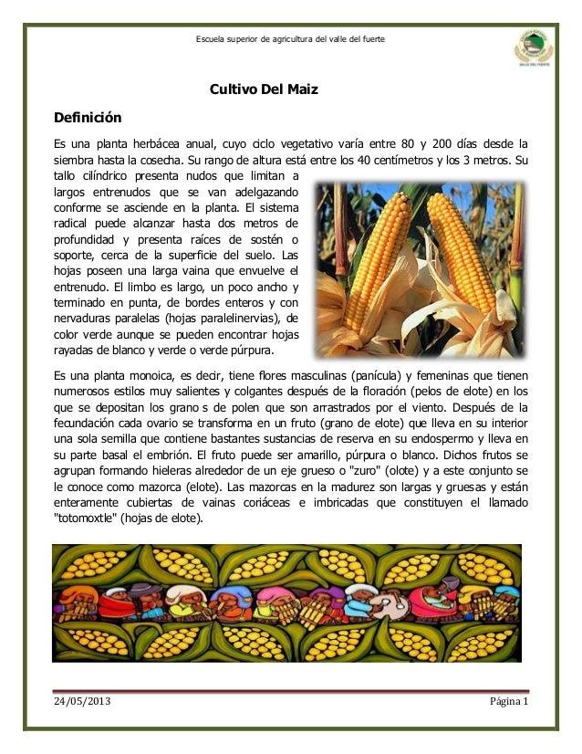 Escuela superior de agricultura del valle del fuerte  Cultivo Del Maiz Definición Es una planta herbácea anual, cuyo ciclo...