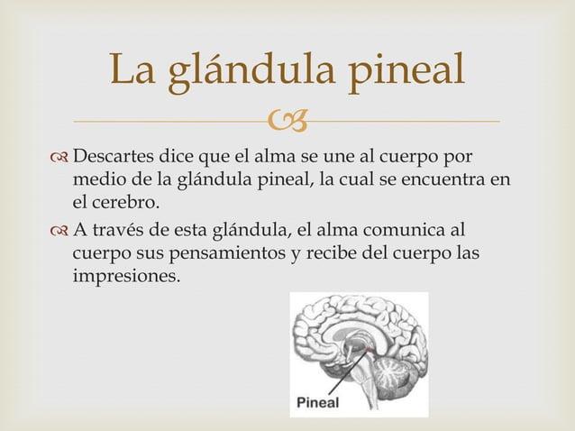 La glándula pineal               Descartes dice que el alma se une al cuerpo por  medio de la glándula pineal, la cual s...