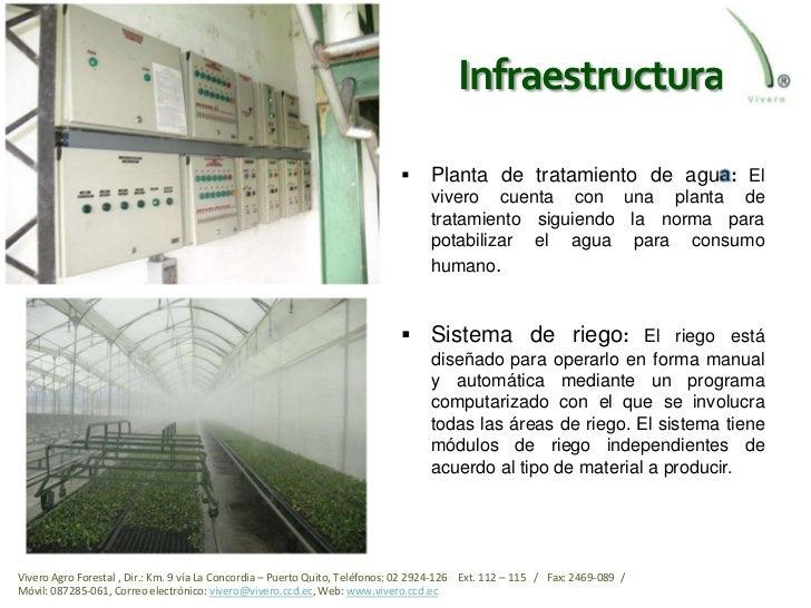 Viveros ecuador el mejor del pa s for Proyecto productivo de vivero forestal