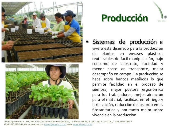 Viveros ecuador el mejor del pa s for Produccion de plantas en vivero pdf