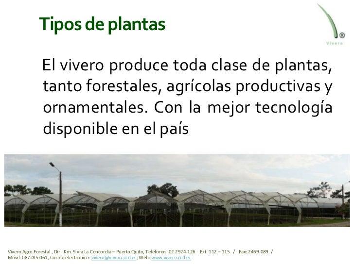 viveros ecuador el mejor del pa s On tipos de viveros forestales