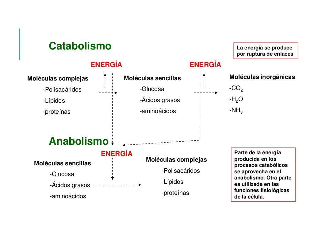Cómo Activar El Metabolismo Para Adelgazar Lo Que Funciona Según La Ciencia