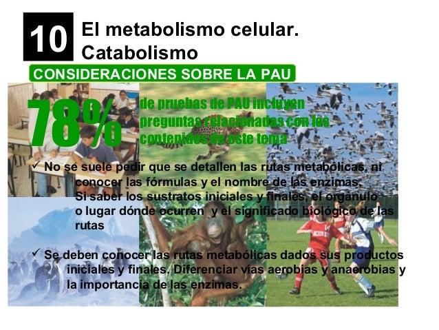 10 El metabolismo celular. Catabolismo CONSIDERACIONES SOBRE LA PAU 78% de pruebas de PAU incluyen preguntas relacionadas ...
