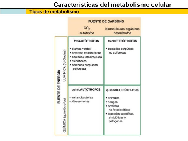 Dieta cetogénica de un vistazo
