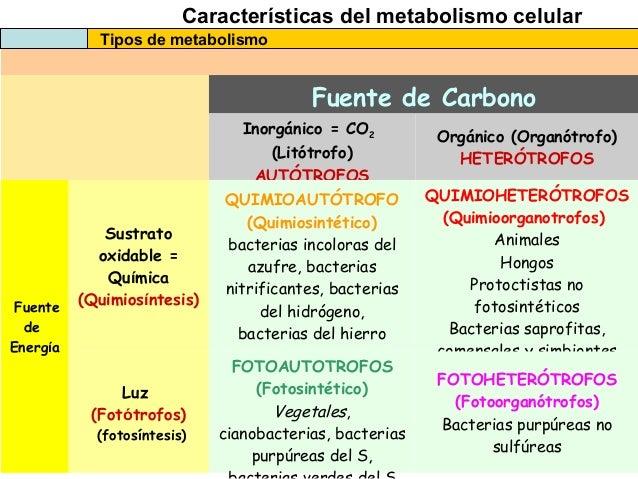 las recetas de la dieta del metabolismo acelerado consejos
