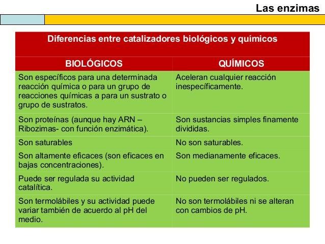El Metabolismo Celular Catabolismo 2013