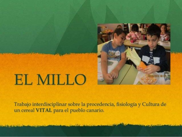 EL MILLO Trabajo interdisciplinar sobre la procedencia, fisiología y Cultura de un cereal VITAL para el pueblo canario.