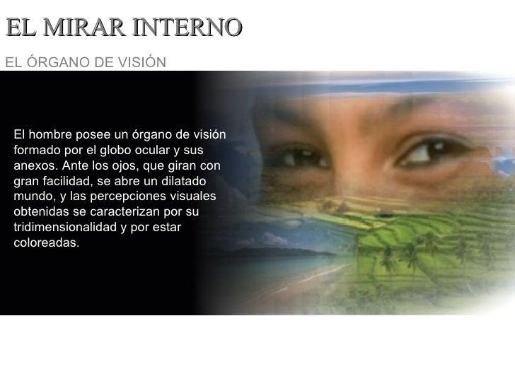 EL MIRAR INTERNO El hombre posee un órgano de visión formado por el globo ocular y sus anexos. Ante los ojos, que giran co...