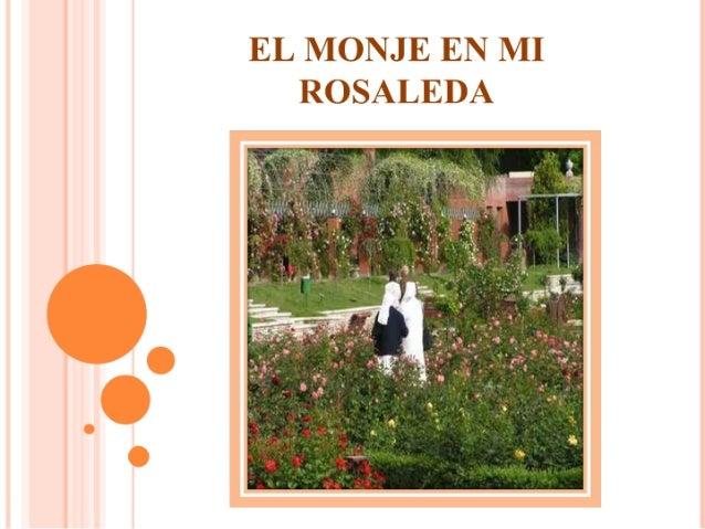 El monje en mi rosaleda