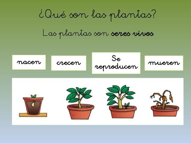 El mundo de las plantas - Cuales son las plantas con flores ...