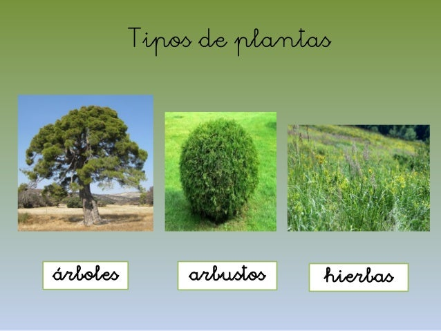 El mundo de las plantas - Lista nombre arbustos ...