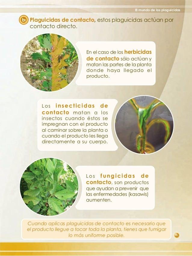 Que ipo de plantas matan los fungicidas