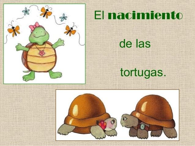El nacimiento de las tortugas.
