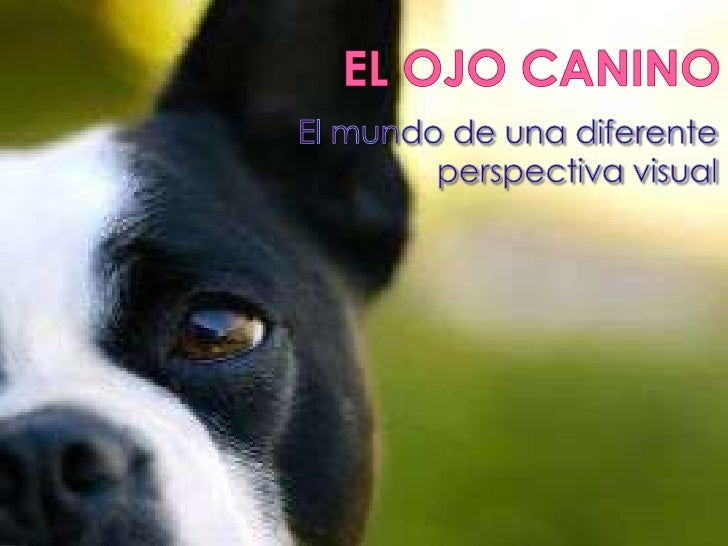 EL OJO CANINO<br />El mundo de una diferente perspectiva visual<br />
