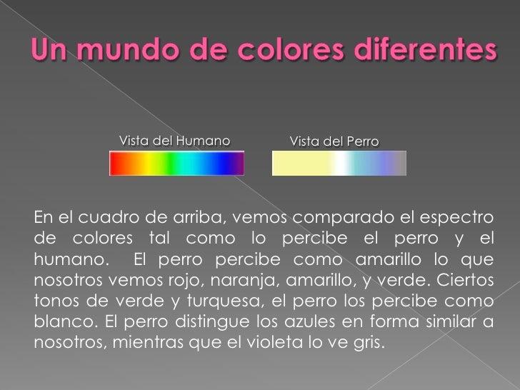 Un mundo de colores diferentes<br />Vista del Perro<br />Vista del Humano<br />En el cuadro de arriba, vemos comparado el ...