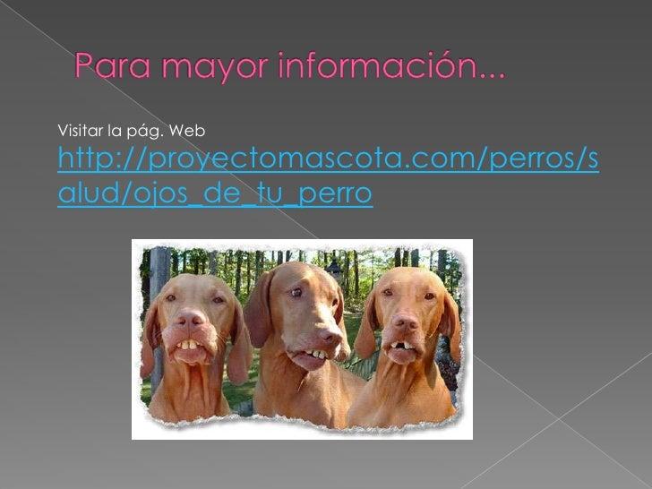 Para mayor información...<br />Visitar la pág. Web<br />http://proyectomascota.com/perros/salud/ojos_de_tu_perro<br />