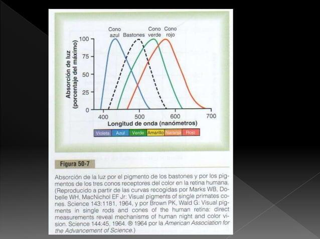  Detecta graduaciones rojas, verdes y azules y sus variaciones monocromáticas