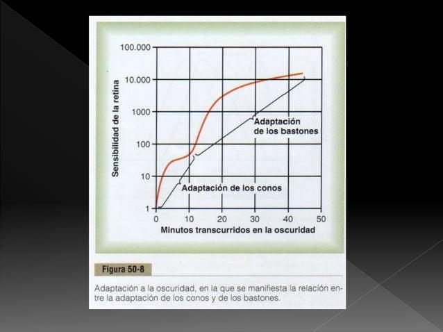  La ausencia de conos rojos se denomina protanopia la cual se encuentra acortando longitudes de ondas largas  La falta d...