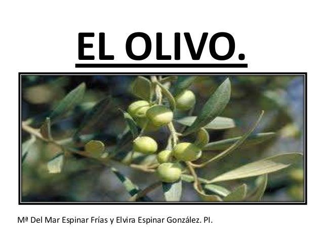 EL OLIVO. Mª Del Mar Espinar Frías y Elvira Espinar González. PI.