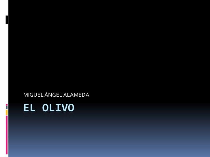 EL OLIVO<br />MIGUEL ÁNGEL ALAMEDA <br />