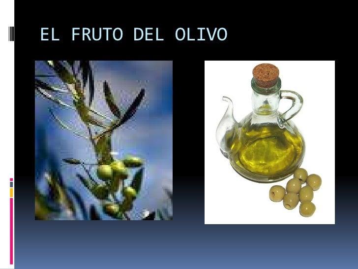EL FRUTO DEL OLIVO<br />