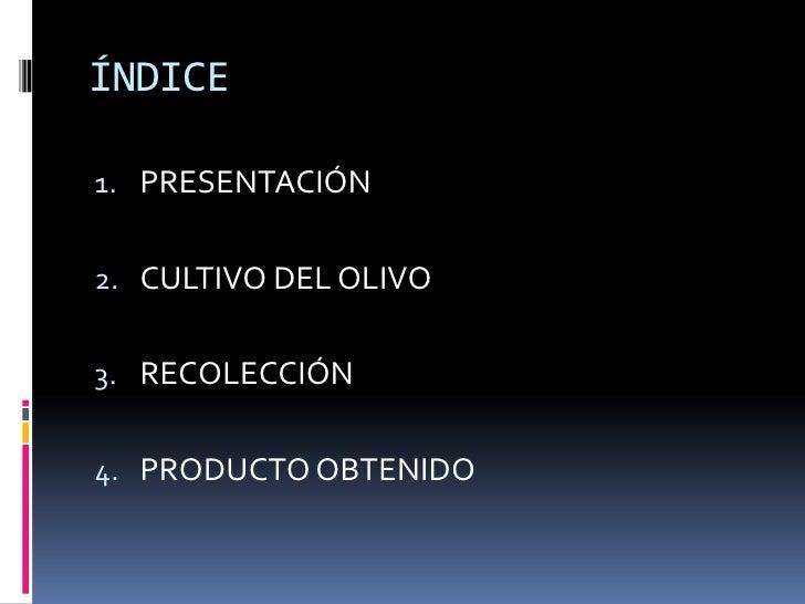 ÍNDICE<br />PRESENTACIÓN<br />CULTIVO DEL OLIVO<br />RECOLECCIÓN<br />PRODUCTO OBTENIDO<br />