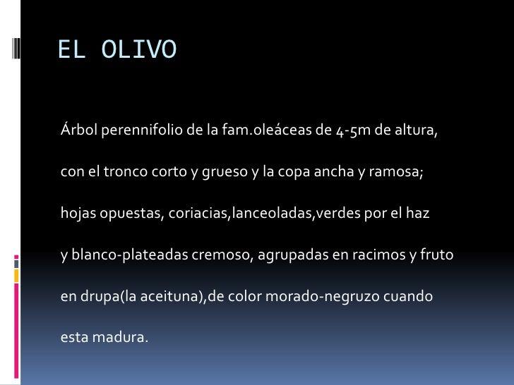 EL OLIVO<br /><br />Árbol perennifolio de la fam.oleáceas de 4-5m de altura,<br />con el tronco corto y grueso y la copa ...