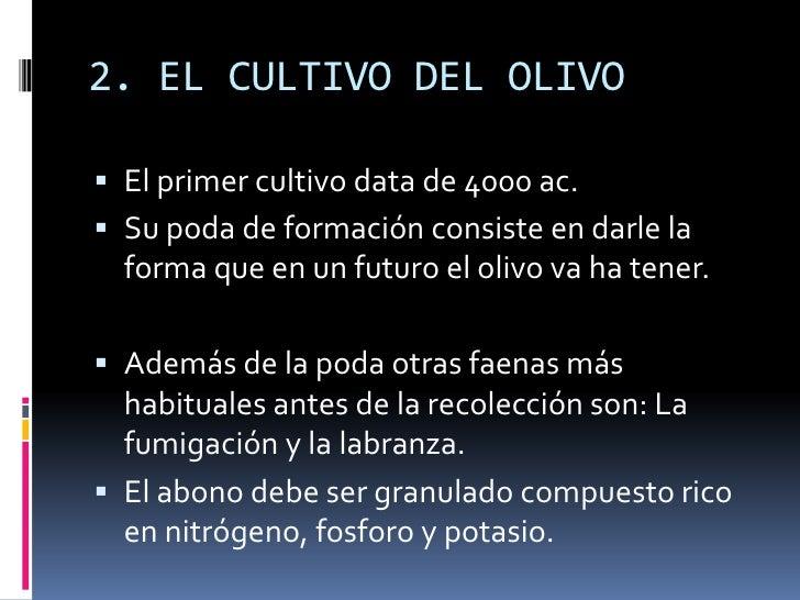 2. EL CULTIVO DEL OLIVO<br />El primer cultivo data de 4000 ac.<br />Su poda de formación consiste en darle la forma que e...