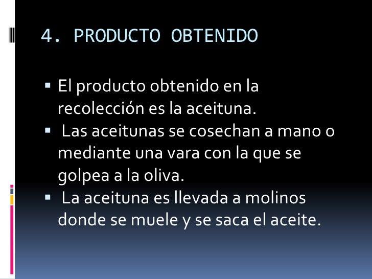 4.PRODUCTO OBTENIDO<br />El producto obtenido en la recolecciónes la aceituna.<br />Las aceitunas secosechan a mano o ...