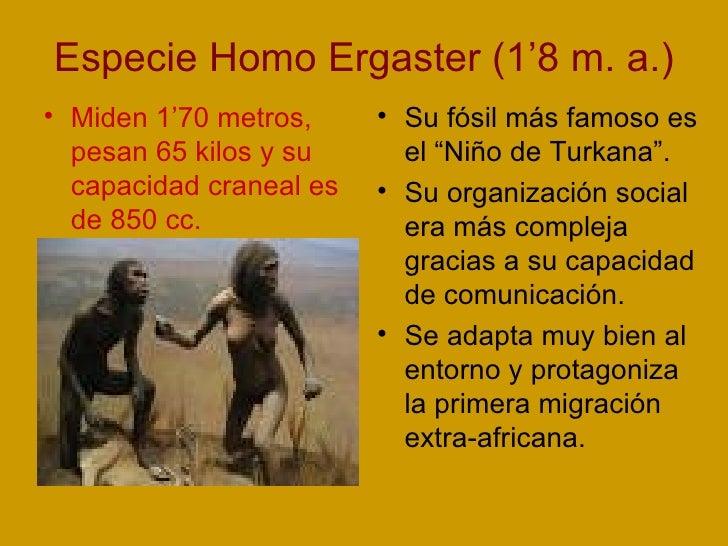 Especie Homo Ergaster (1'8 m. a.) <ul><li>Miden 1'70 metros, pesan 65 kilos y su capacidad craneal es de 850 cc. </li></ul...