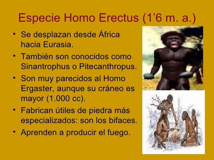 Especie Homo Erectus (1'6 m. a.) <ul><li>Se desplazan desde África hacia Eurasia. </li></ul><ul><li>También son conocidos ...