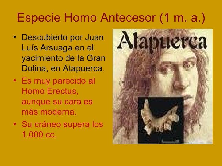 Especie Homo Antecesor (1 m. a.) <ul><li>Descubierto por Juan Luís Arsuaga en el yacimiento de la Gran Dolina, en Atapuerc...