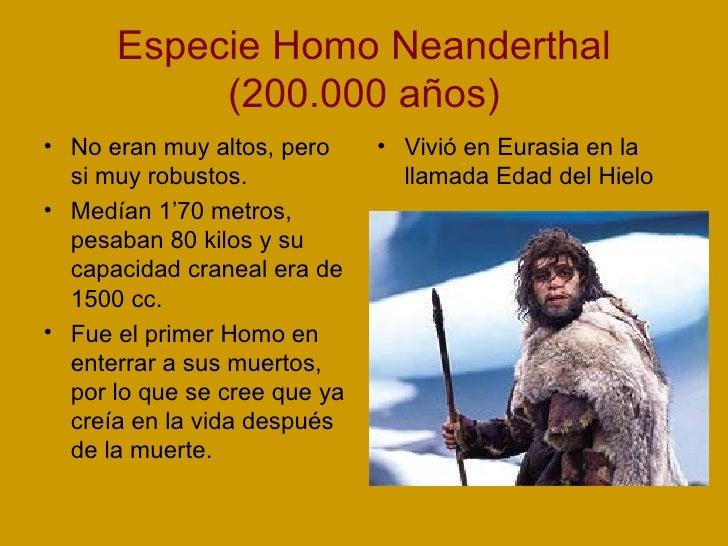 Especie Homo Neanderthal (200.000 años) <ul><li>No eran muy altos, pero si muy robustos. </li></ul><ul><li>Medían 1'70 met...
