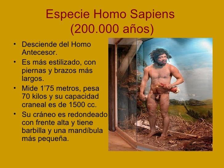 Especie Homo Sapiens  (200.000 años) <ul><li>Desciende del Homo Antecesor. </li></ul><ul><li>Es más estilizado, con pierna...