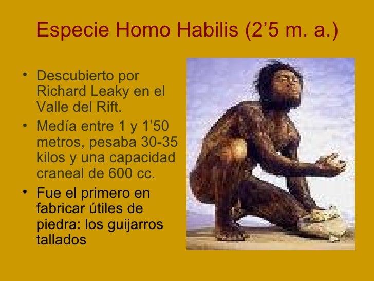 Especie Homo Habilis (2'5 m. a.) <ul><li>Descubierto por Richard Leaky en el Valle del Rift. </li></ul><ul><li>Medía entre...