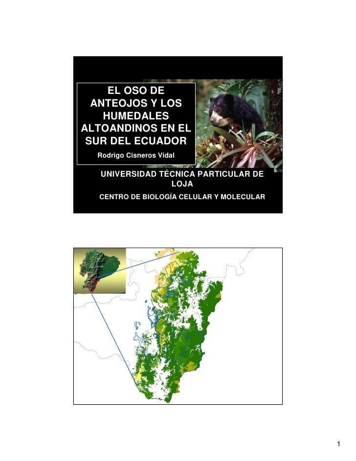 EL OSO DE   ANTEOJOS Y LOS     HUMEDALES ALTOANDINOS EN EL  SUR DEL ECUADOR   Rodrigo Cisneros Vidal     UNIVERSIDAD TÉCNI...