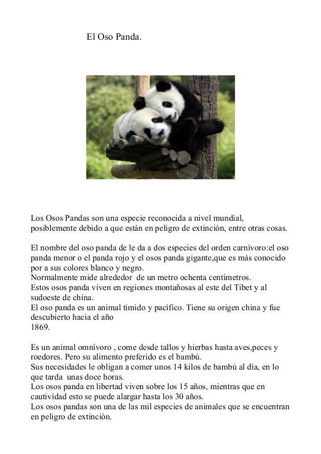 El Oso Panda.Los Osos Pandas son una especie reconocida a nivel mundial,posiblemente debido a que están en peligro de exti...
