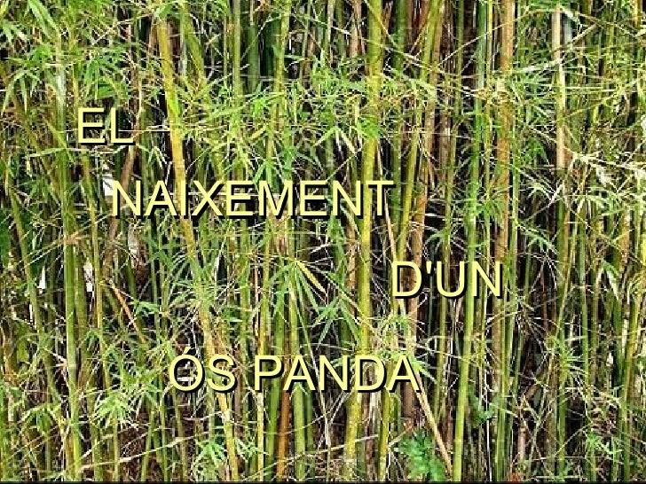 EL NAIXEMENT D'UN ÓS PANDA