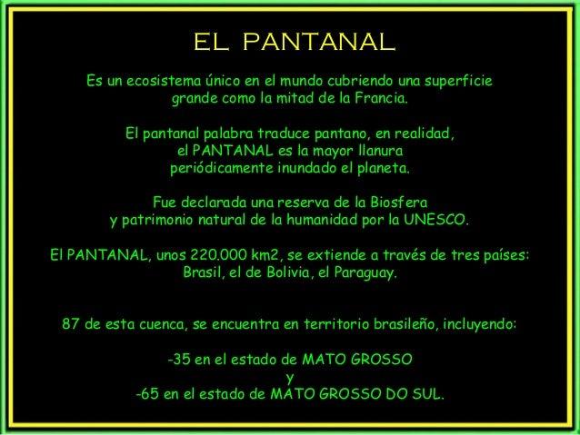 EL PANTANAL Es un ecosistema único en el mundo cubriendo una superficie grande como la mitad de la Francia. El pantanal pa...