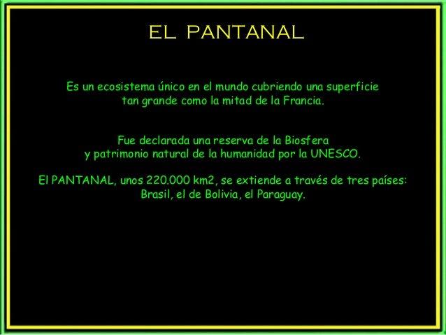 EL PANTANALEL PANTANAL Es un ecosistema único en el mundo cubriendo una superficie tan grande como la mitad de la Francia....